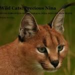 precious_caracal_nina